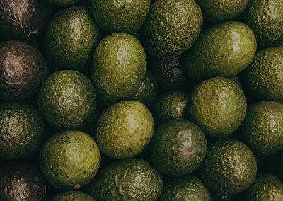 hillgro-avocado-avo-tree-nursery-south-africa-