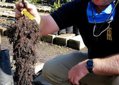 hillgro-macadamia-tree-nursery-south-africa-how-to-grow